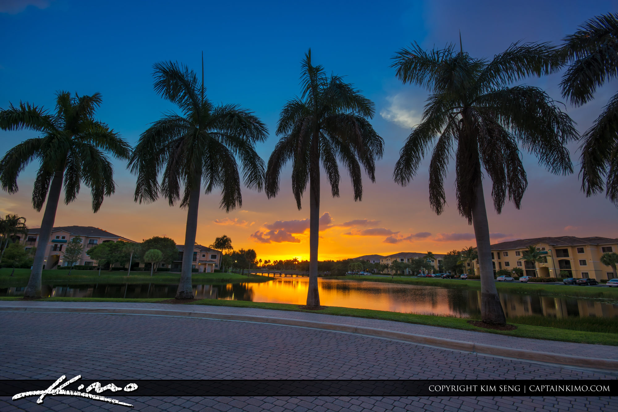 Royal Palm Tree Sunset Over Palm Beach Gardens