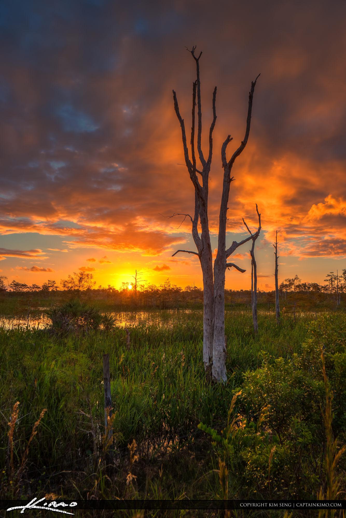Sunrise Sandhill Crane Park Wetlands Natural Area