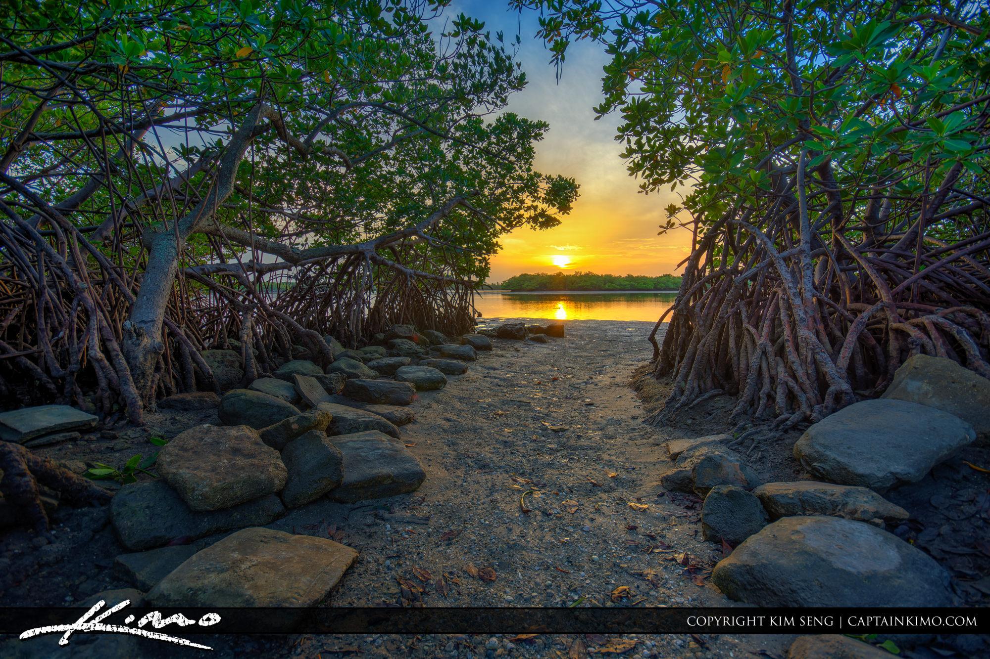 Sunset Between Mangrove on Singer Island