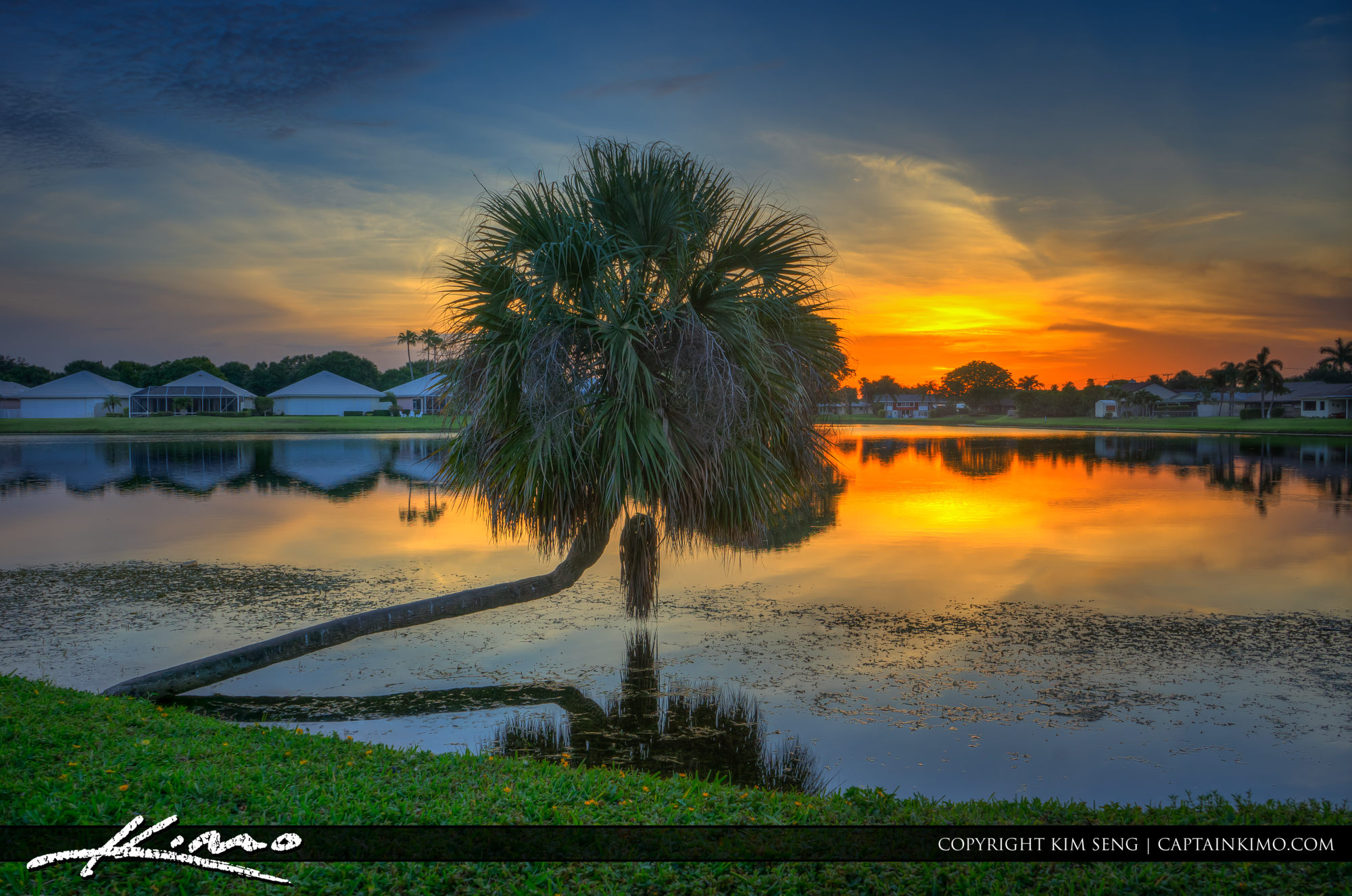 Sunset Lake with Palm Tree Palm Beach Gardens Florida