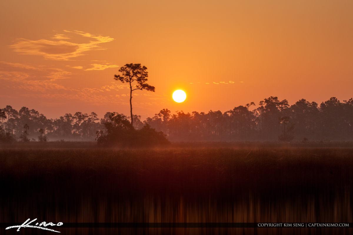 Sunrise Florida Landscape Pine Forest