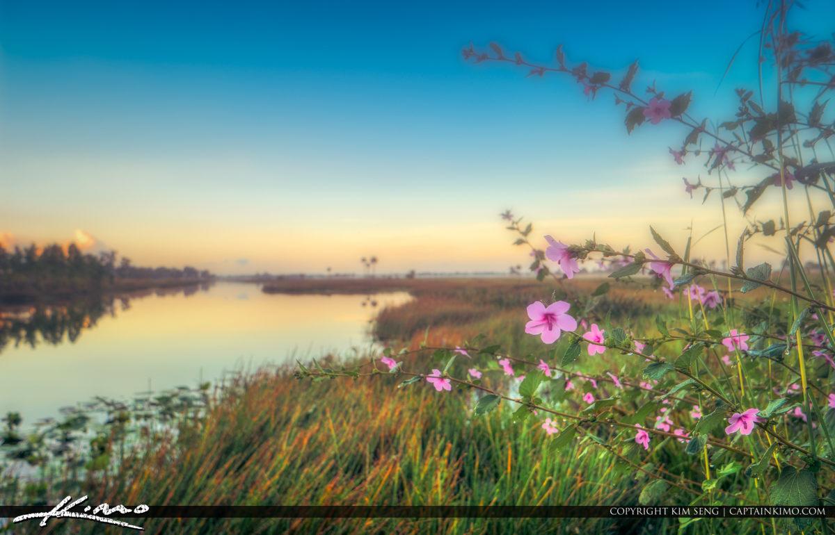 Pink Flowers Pine Glades Wetlands