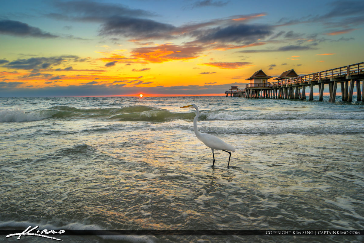 Naples Pier Sunset White Egret