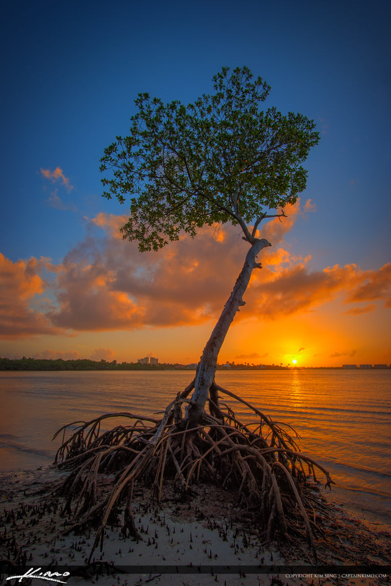 Mangrove Sunset Singer Island Lake Worth Lagoon