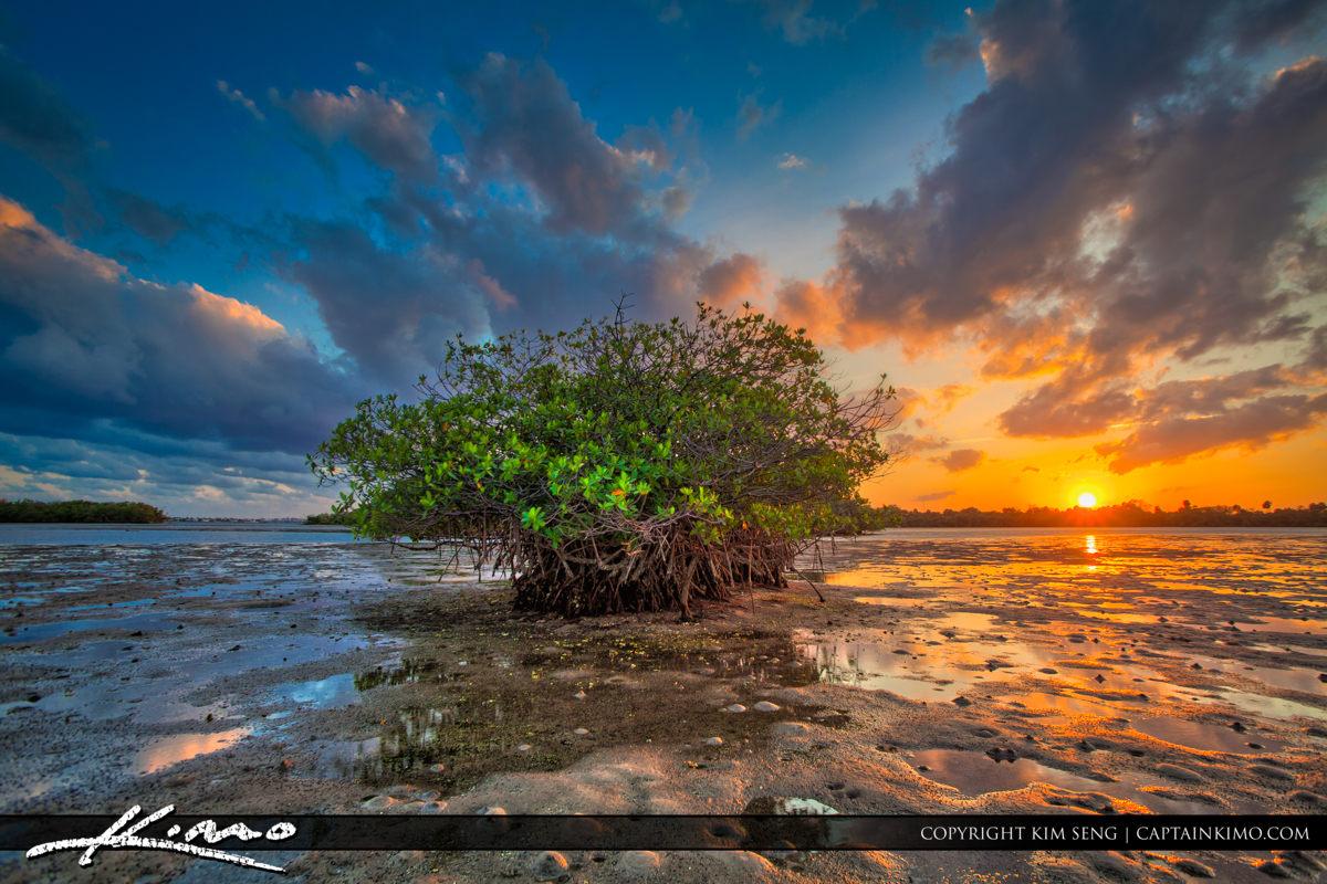 Mangrove Island Sunset Palm Beach Florida