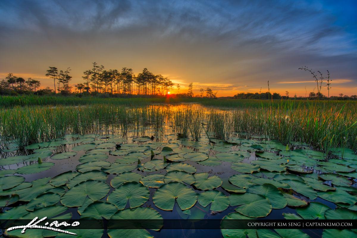 Florida Wetlands Sunset Lilypads Aurora