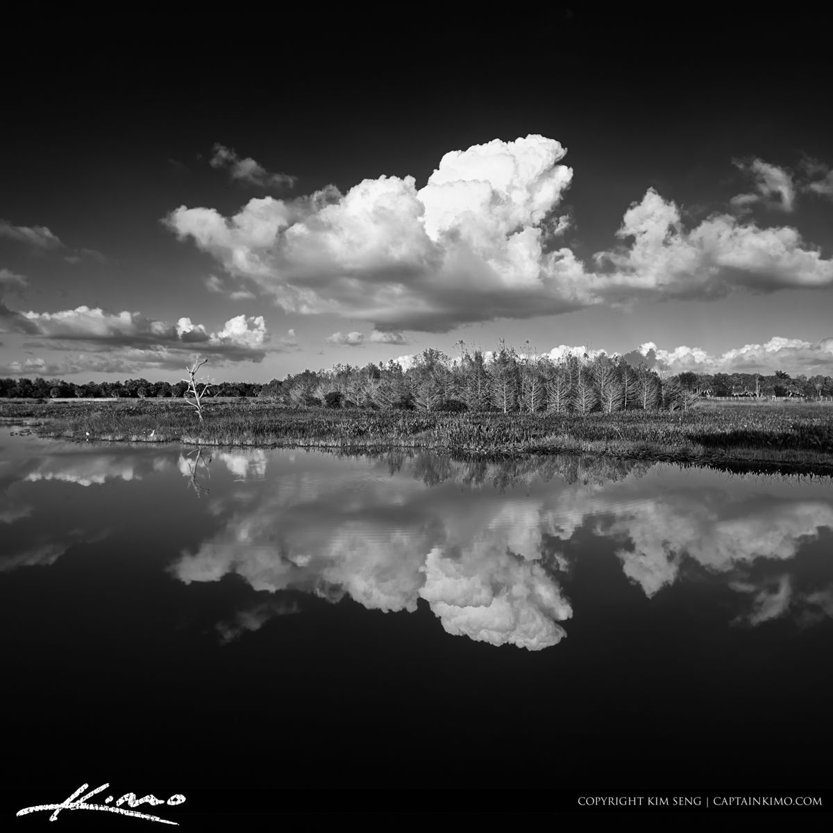 Green Cay Wetlands Black and White