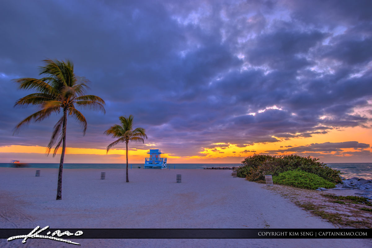 Haulover Park Florida Coconut Tree and Lifeguard Tower