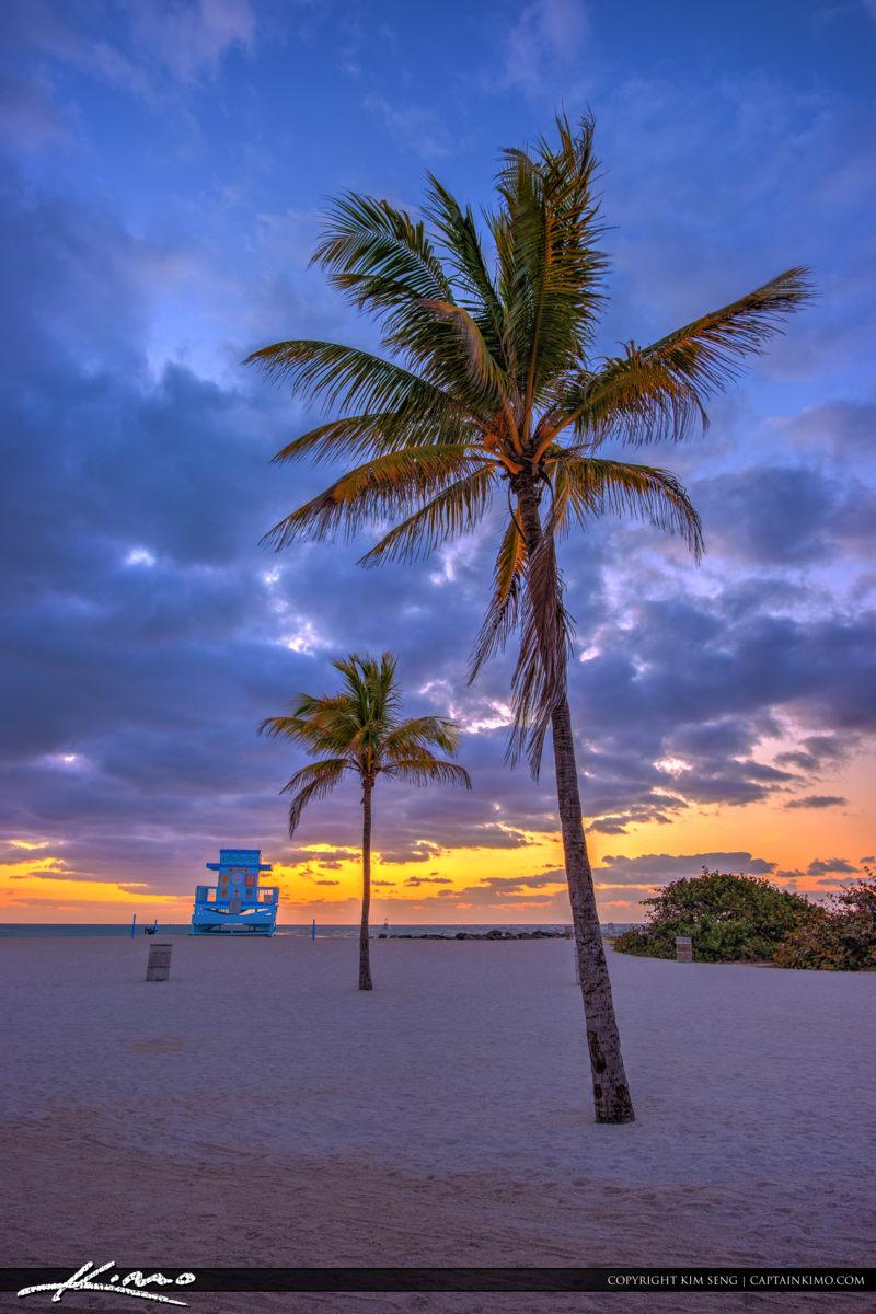 Haulover Park Florida Coconut Tree at Sunrise