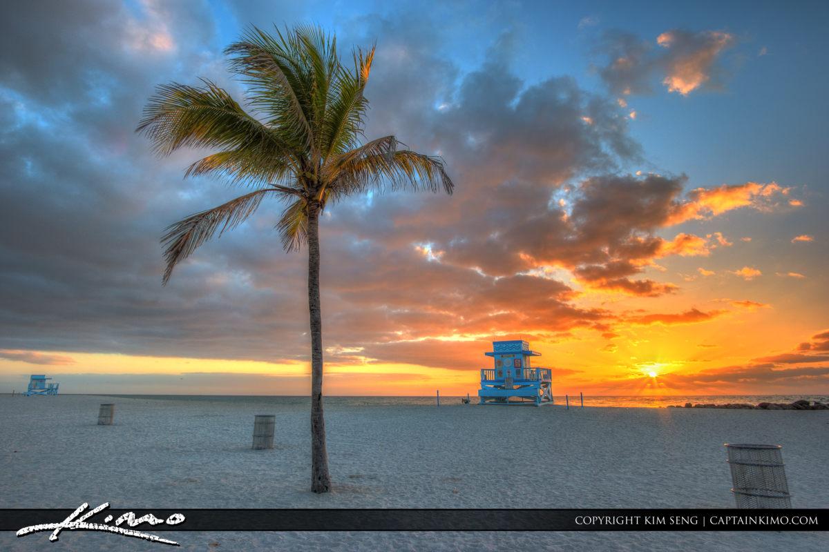 Haulover Park Florida Coconut Tree during Sunrise