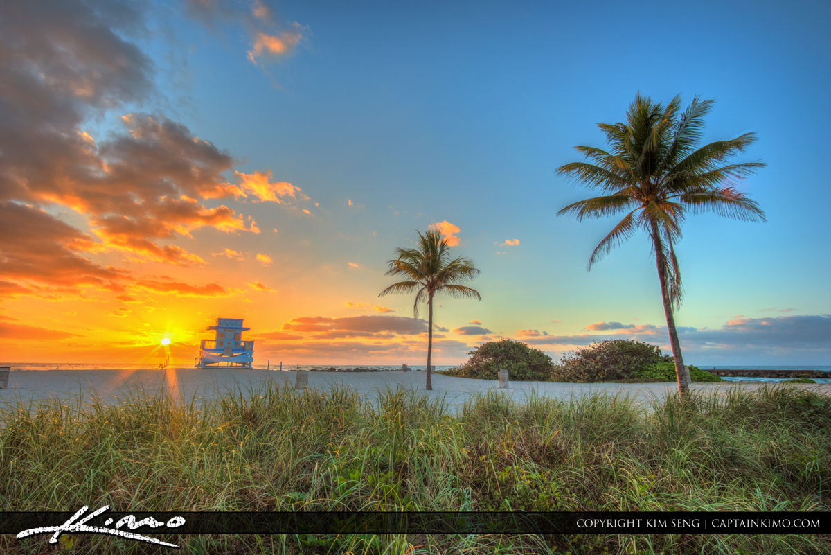 Haulover Park Florida Coconut Palms and Guard Tower