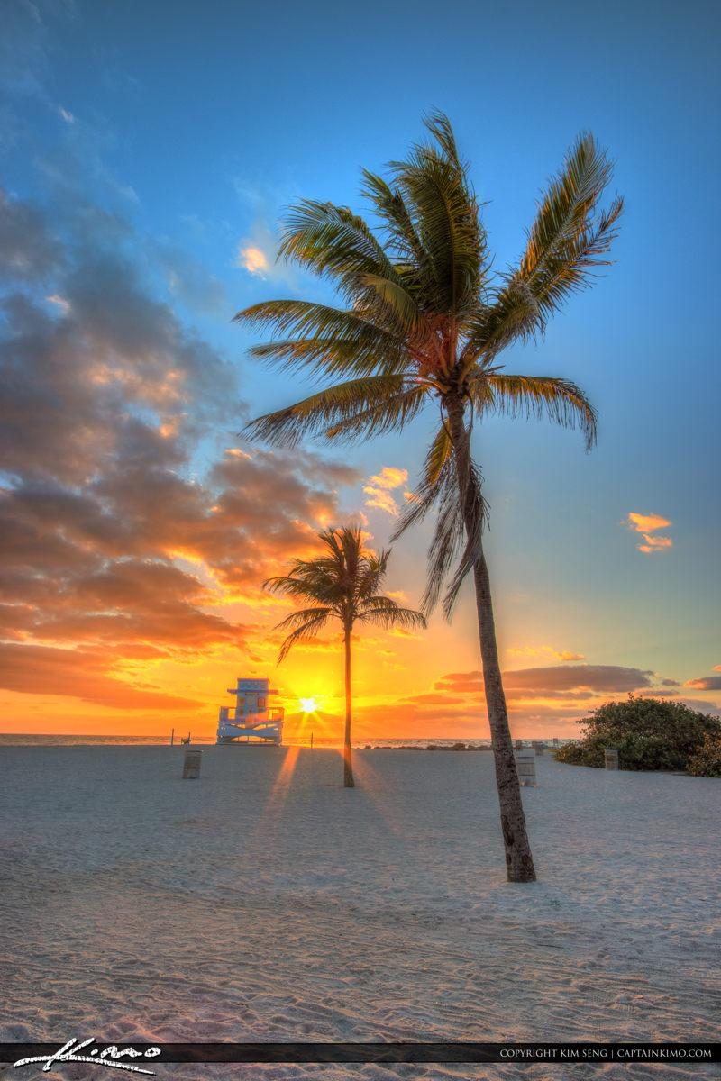 Haulover Park Florida Vertical Sunrise Coconut Tree