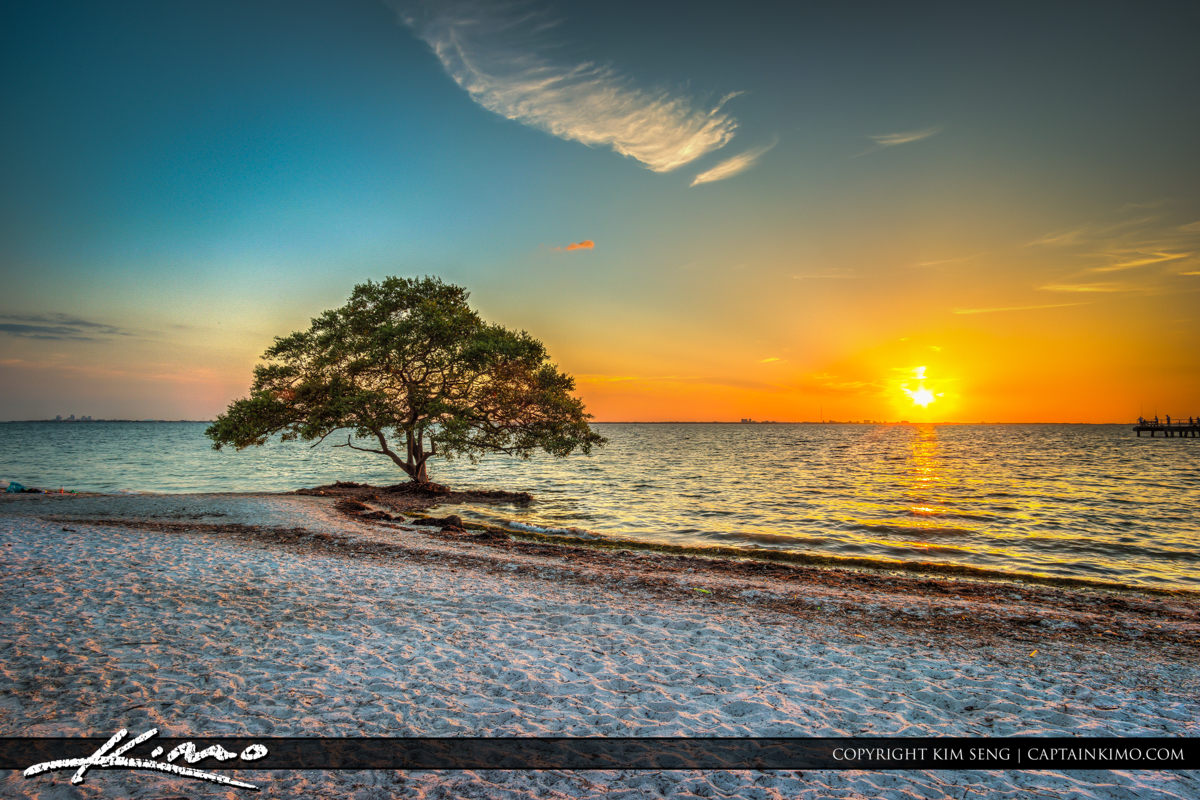 Tampa Florida Mangrove Sunset