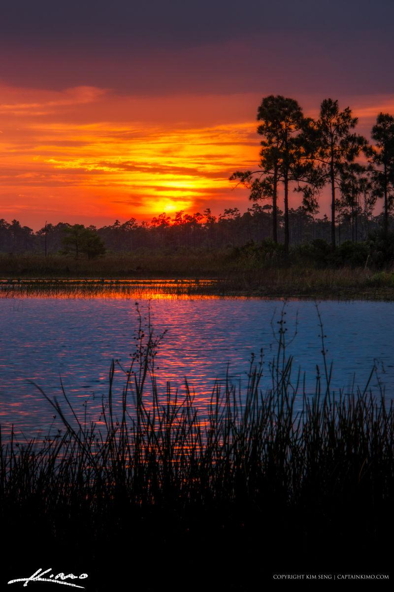 Florida Landscape Sunset Pine Forest