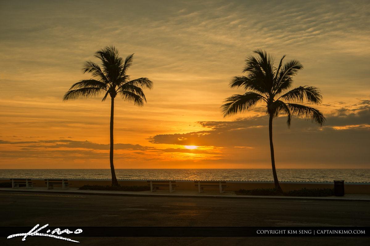 Palm Beach Island Palm Tree Sunrise Inbetween