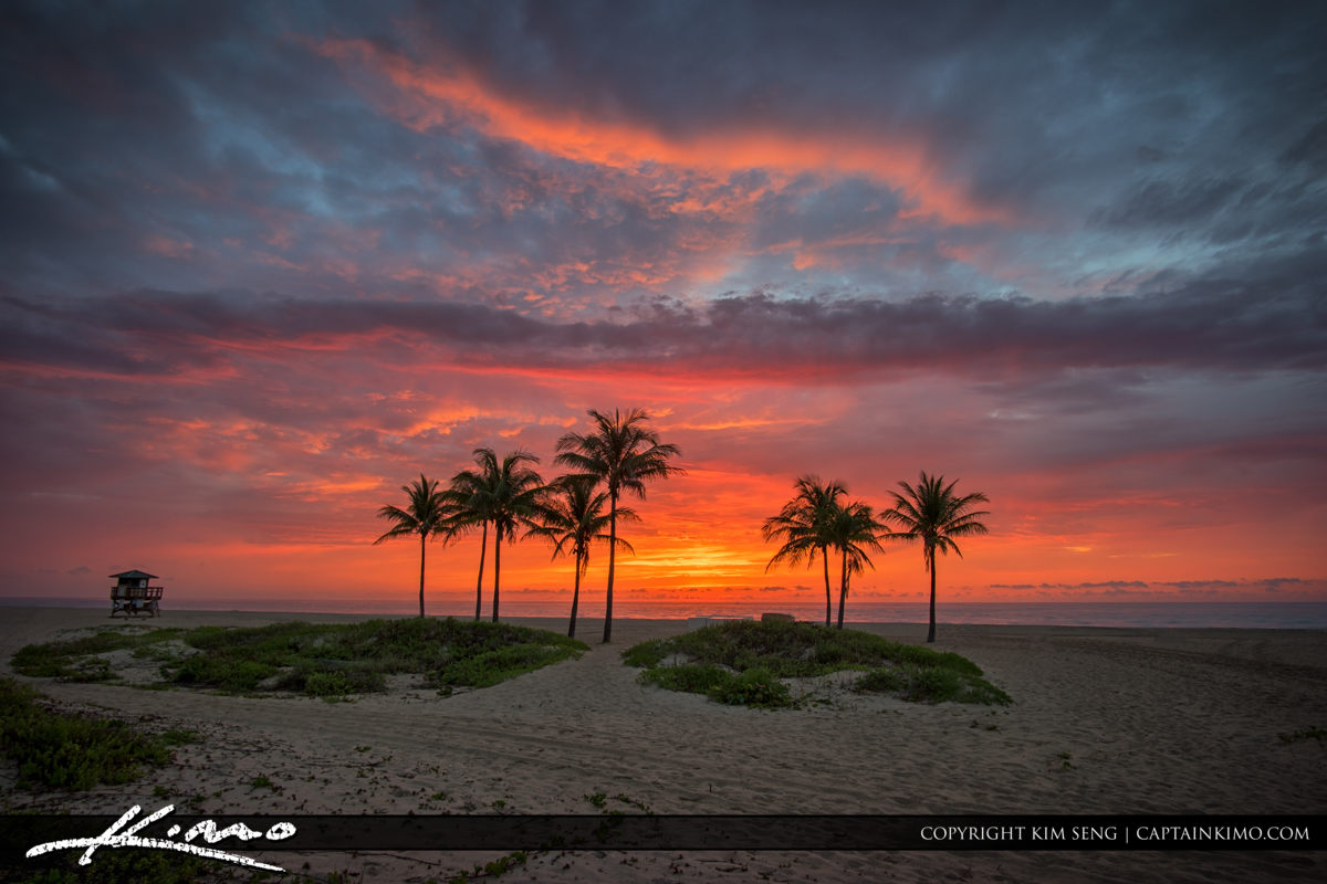 Explosive Sunrise Colors Over Cocnut Trees at Beach