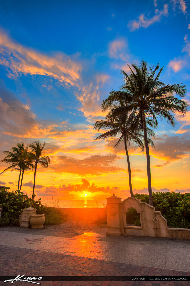 Hollywood Beach Magical Sunrise with Tall Coconut Trees