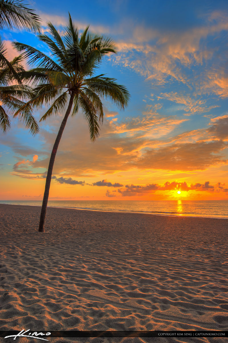 Hollywood Beach Coconut Palm Sunrise