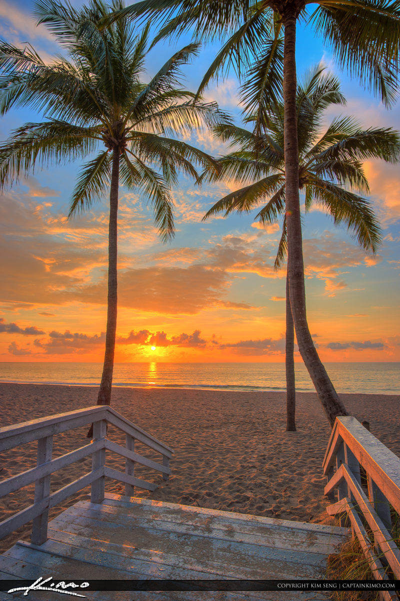 Hollywood Beach Coconut Tree Sunrise South Florida