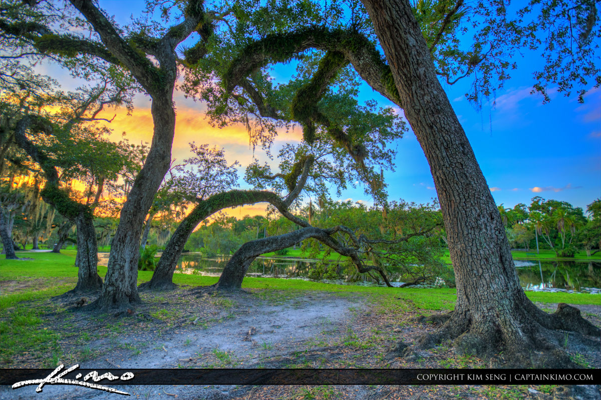 Fort Pierce White City Park Large Oak Trees