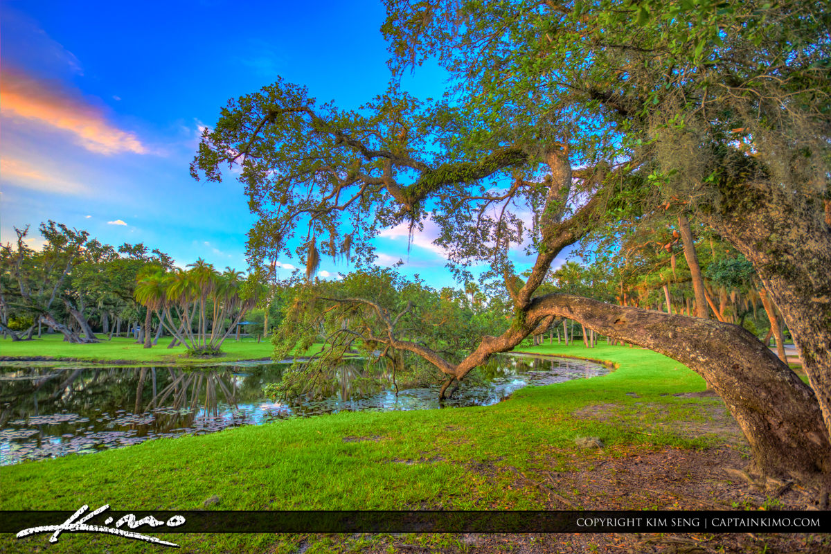 Fort Pierce White City Park Beautiful Oak Tree Over Pond