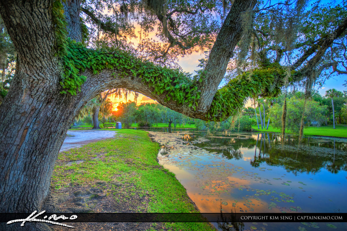 Fort Pierce White City Park Beautiful Oak Tree and Resurrection
