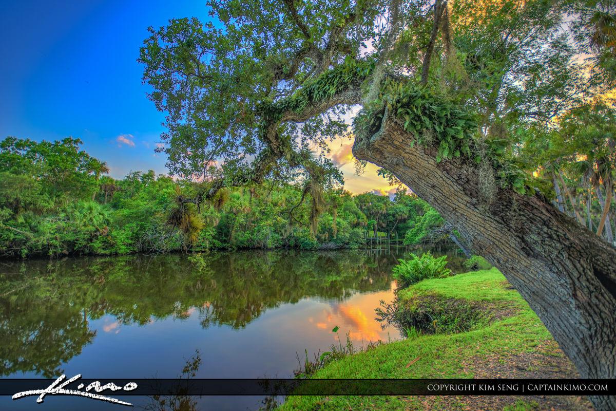 Fort Pierce White City Park Oak Tree St Lucie River