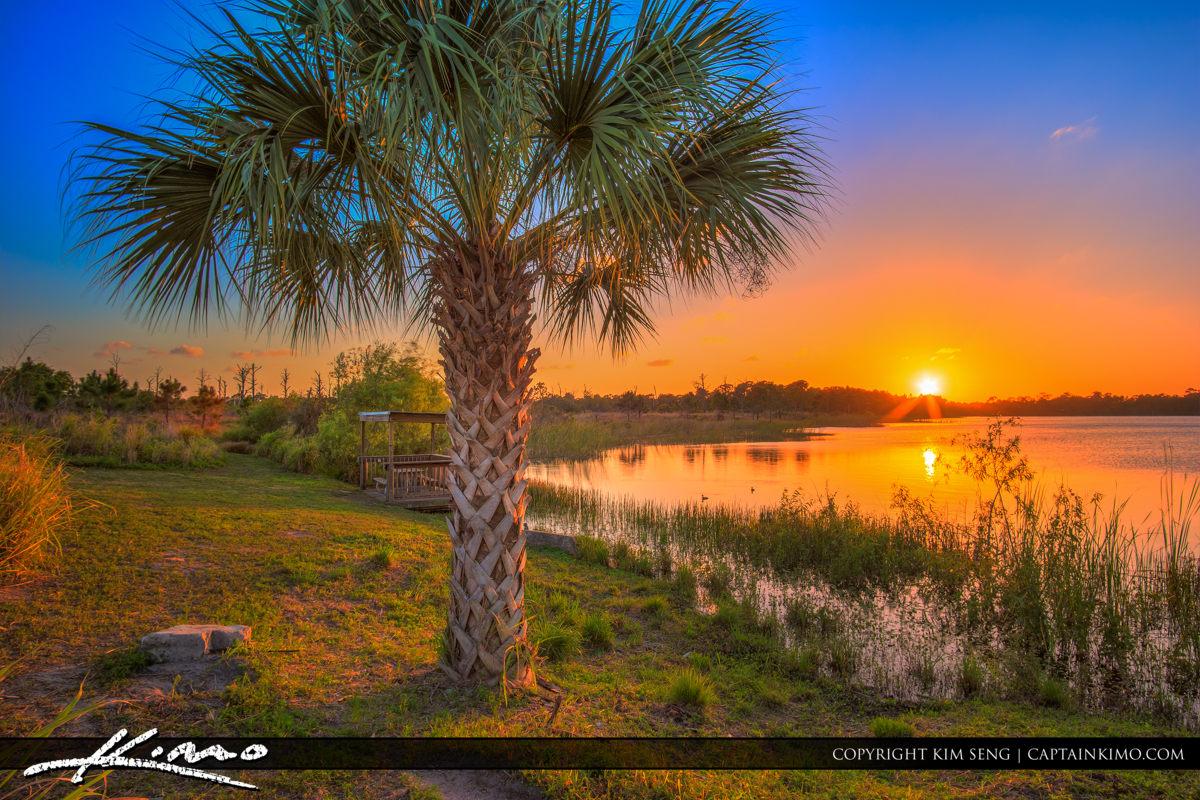Fort Pierce George LeStrange Preserve Palm Tree Sunset