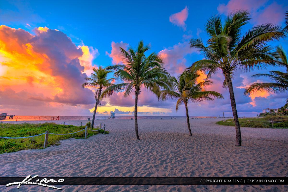 Pompano Beach Pier Coconut Trees at Beach