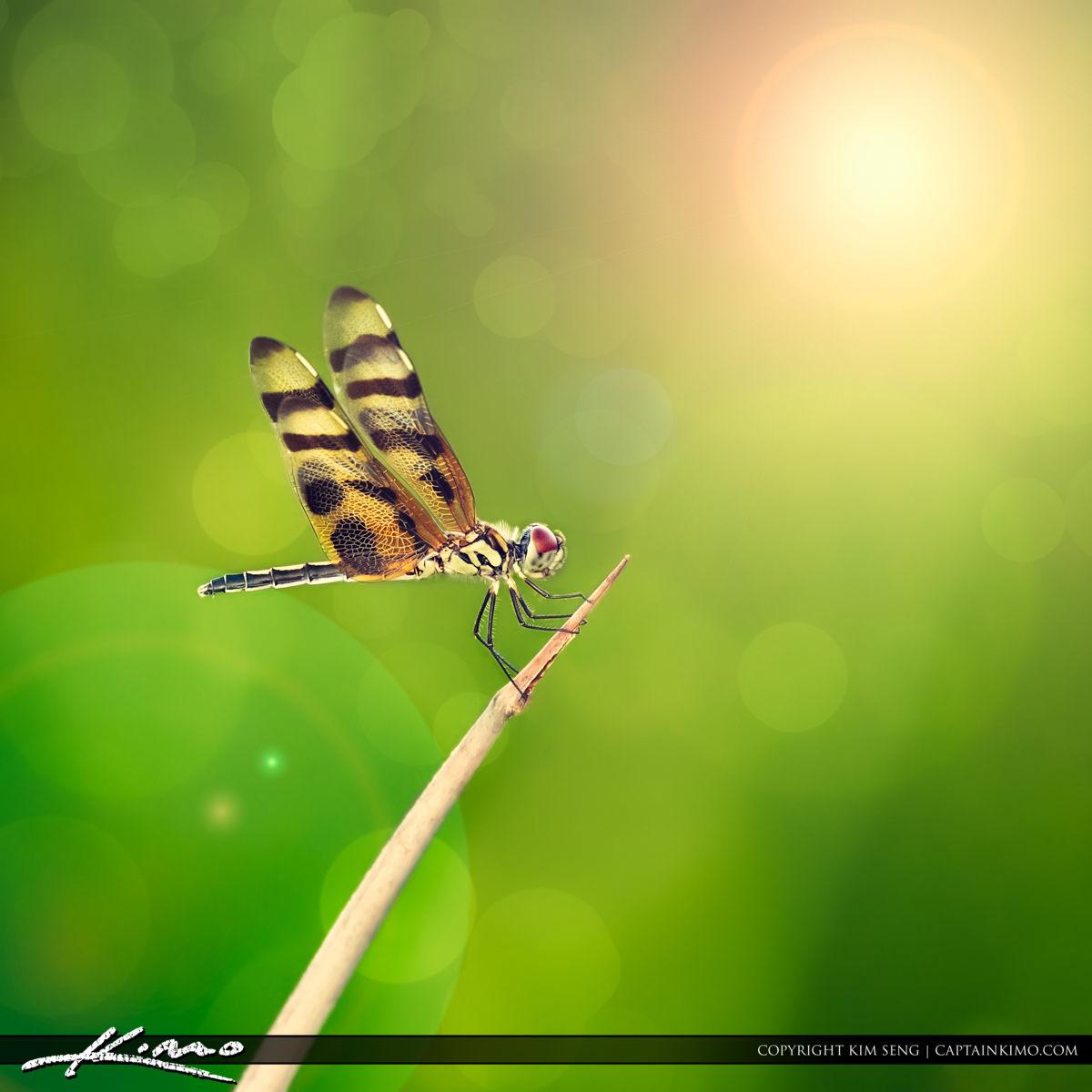 Dragonfly Green Bokeh Background Photo Art