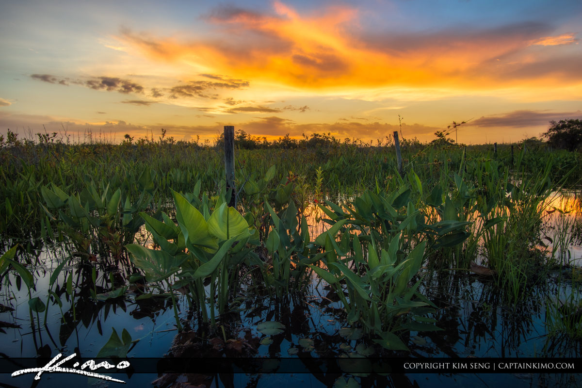 Wetlands at Palm Beach Gardens Natural Area Sunset