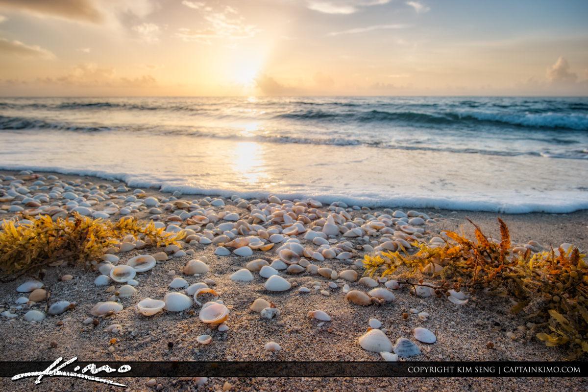 Sunrise at Beach with Seashells Singer Island
