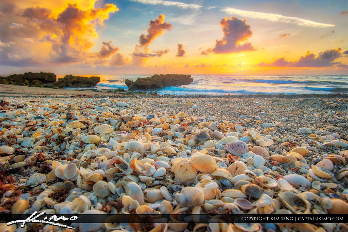 Seashells on South Florida Beach