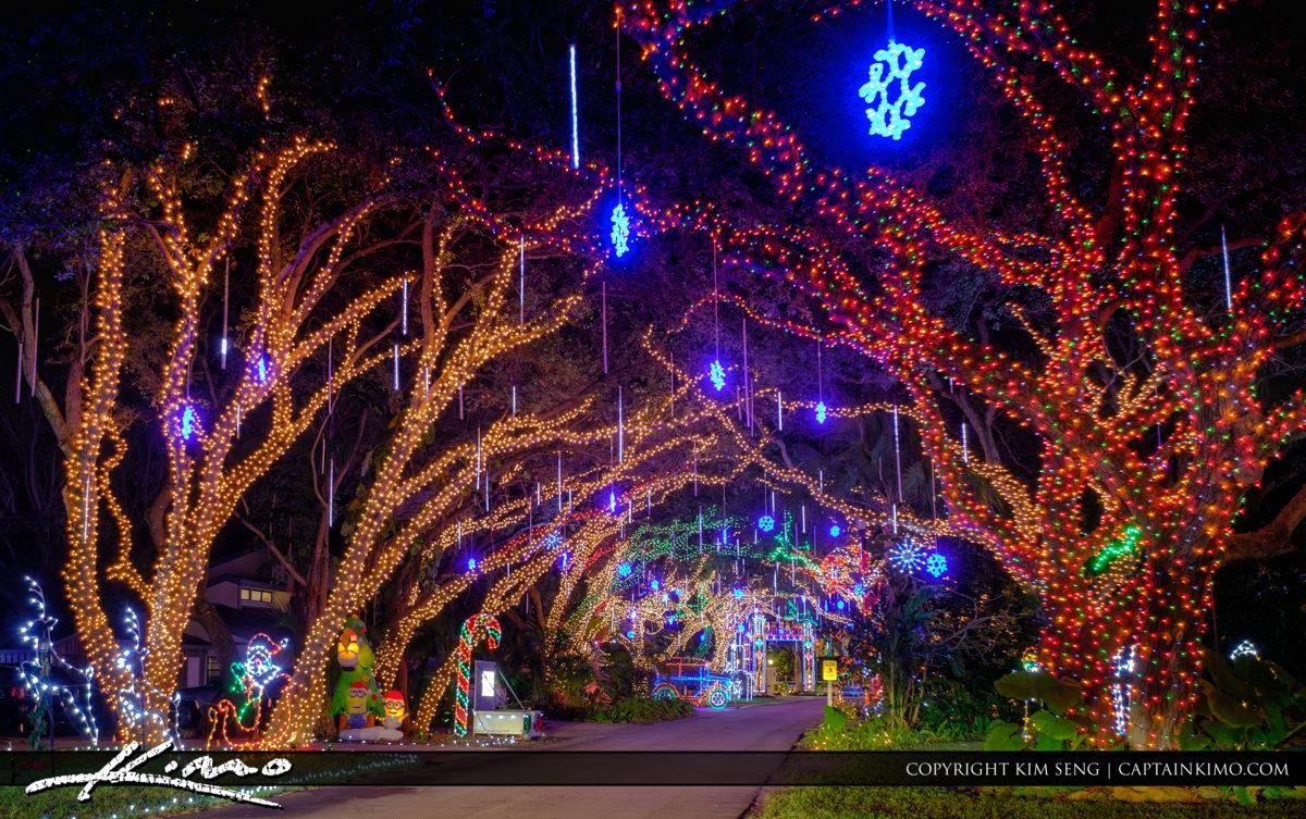 Christmas Lights on Oak Trees along Snug Harbor Road