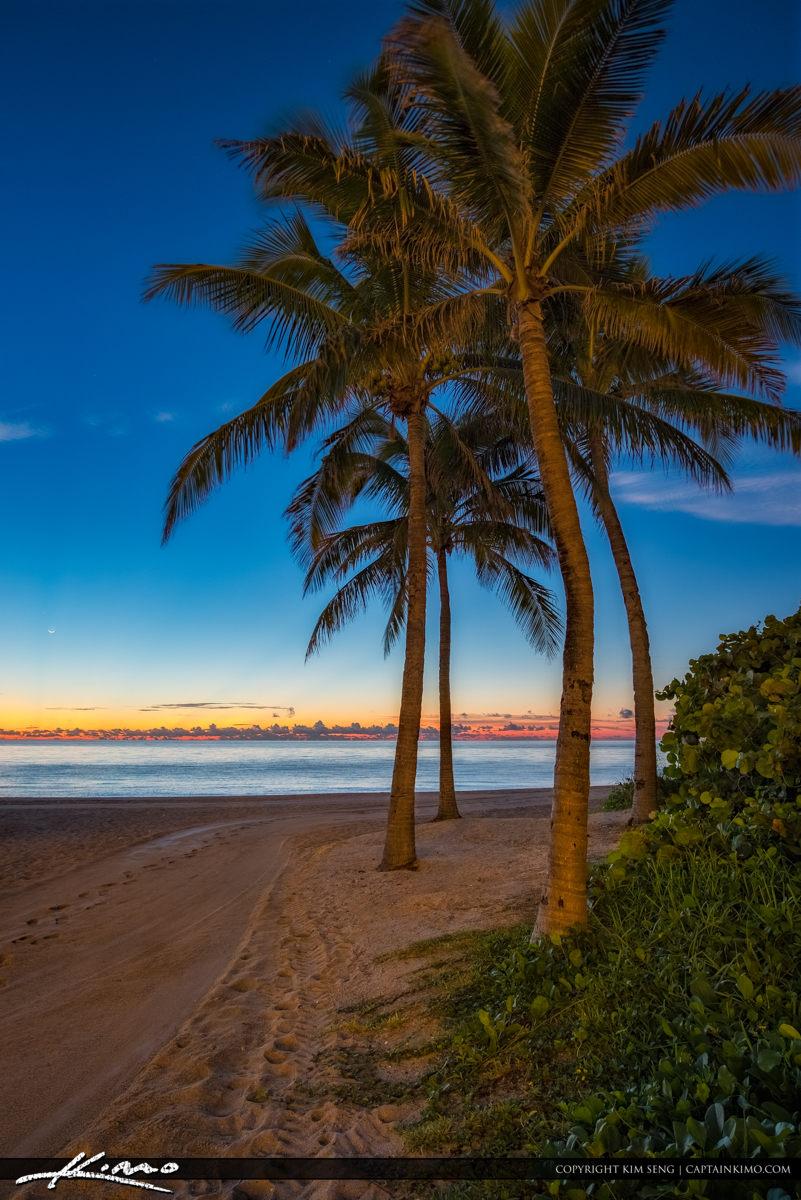 Sunny Isles Beach Coconut Tree Early Morning North Miami Florida