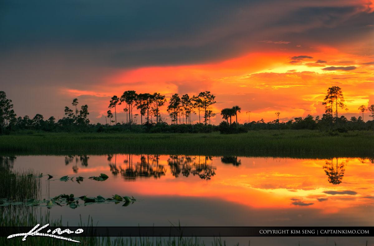 Pine Glades Wetlands Natural Area Sunset