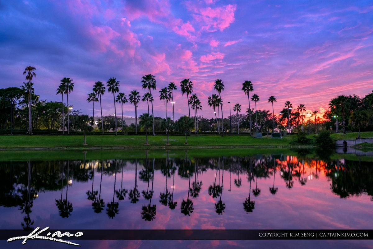 Palm Trees Over Lake Palm Beach Gardens Florida Sunset