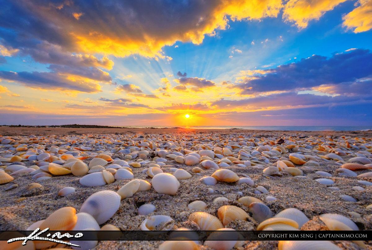 Ocean Reef Park Sunrise with Seashells