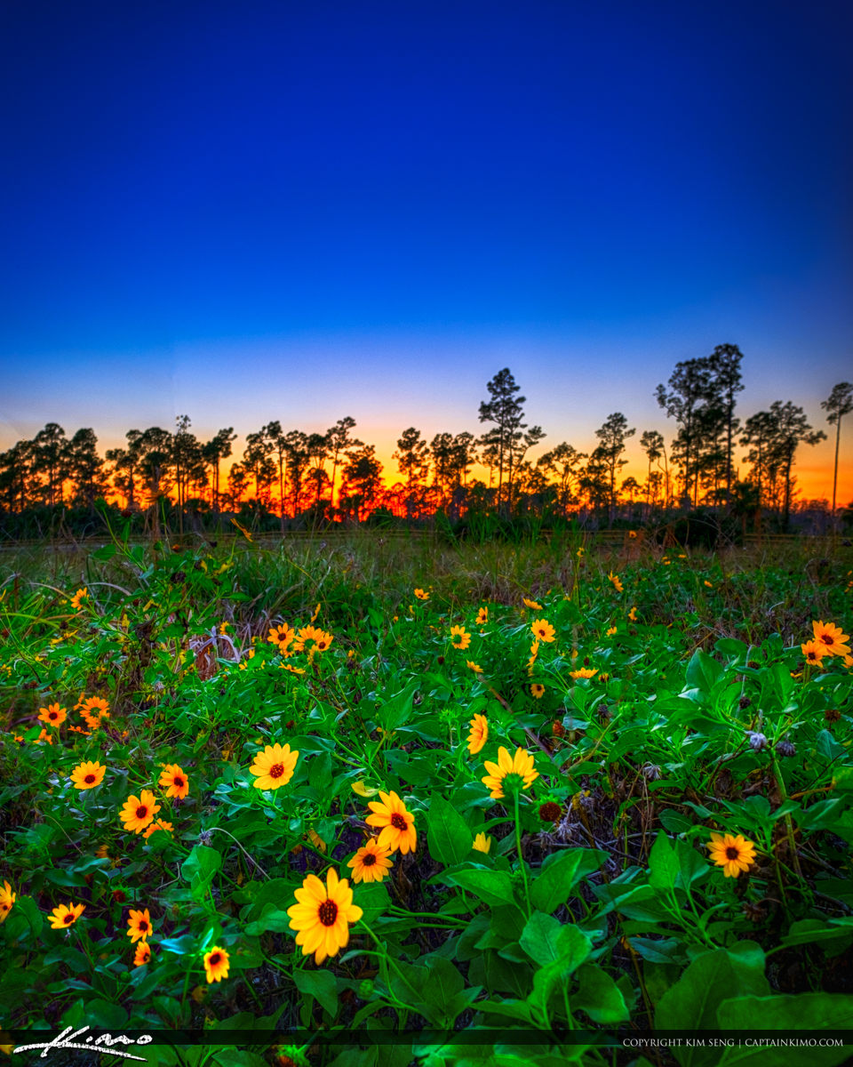 Sunset Cypress Creek South Natural Area with Flowers