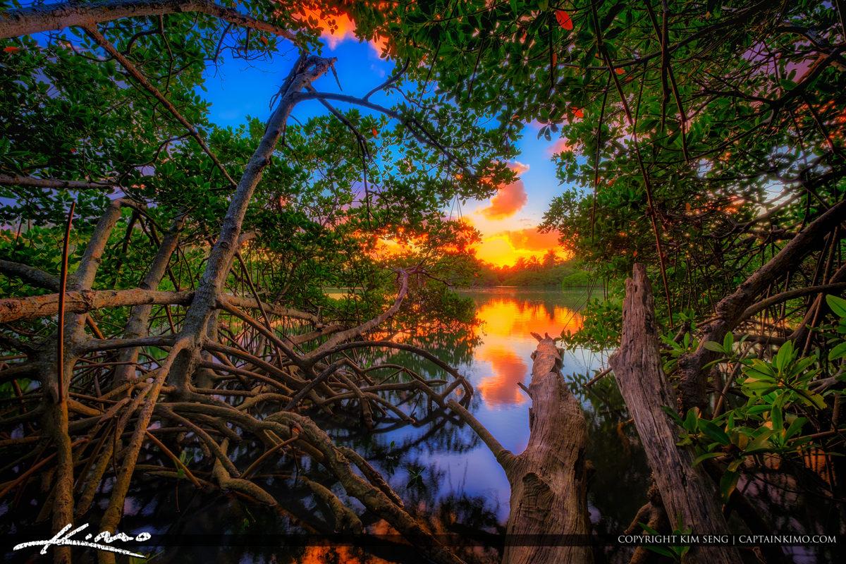 Jupiter Inlet Lagoon Sunset through Mangrove Tree