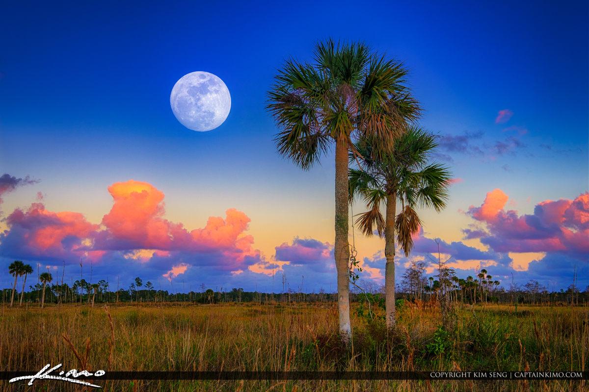Moon Rise Pine Glades Natural Area Jupiter Florida Purple Sky