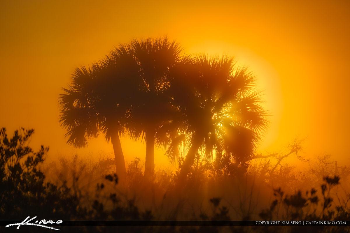Florida Landscape Foggy Morning at Juno Dunes Natural Area