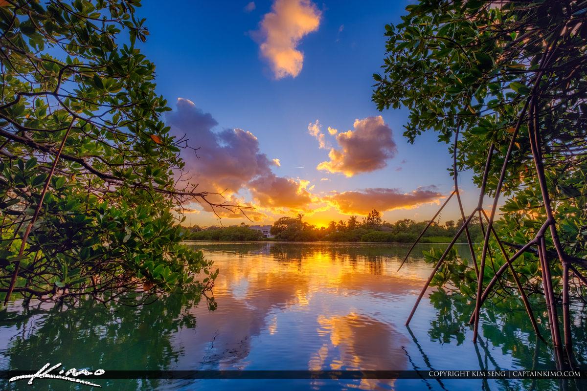 Mangrove Jupiter Beach Park