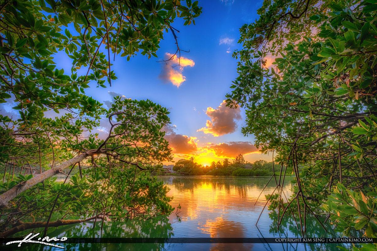 Jupiter Beach Park Mangrove at Sunset