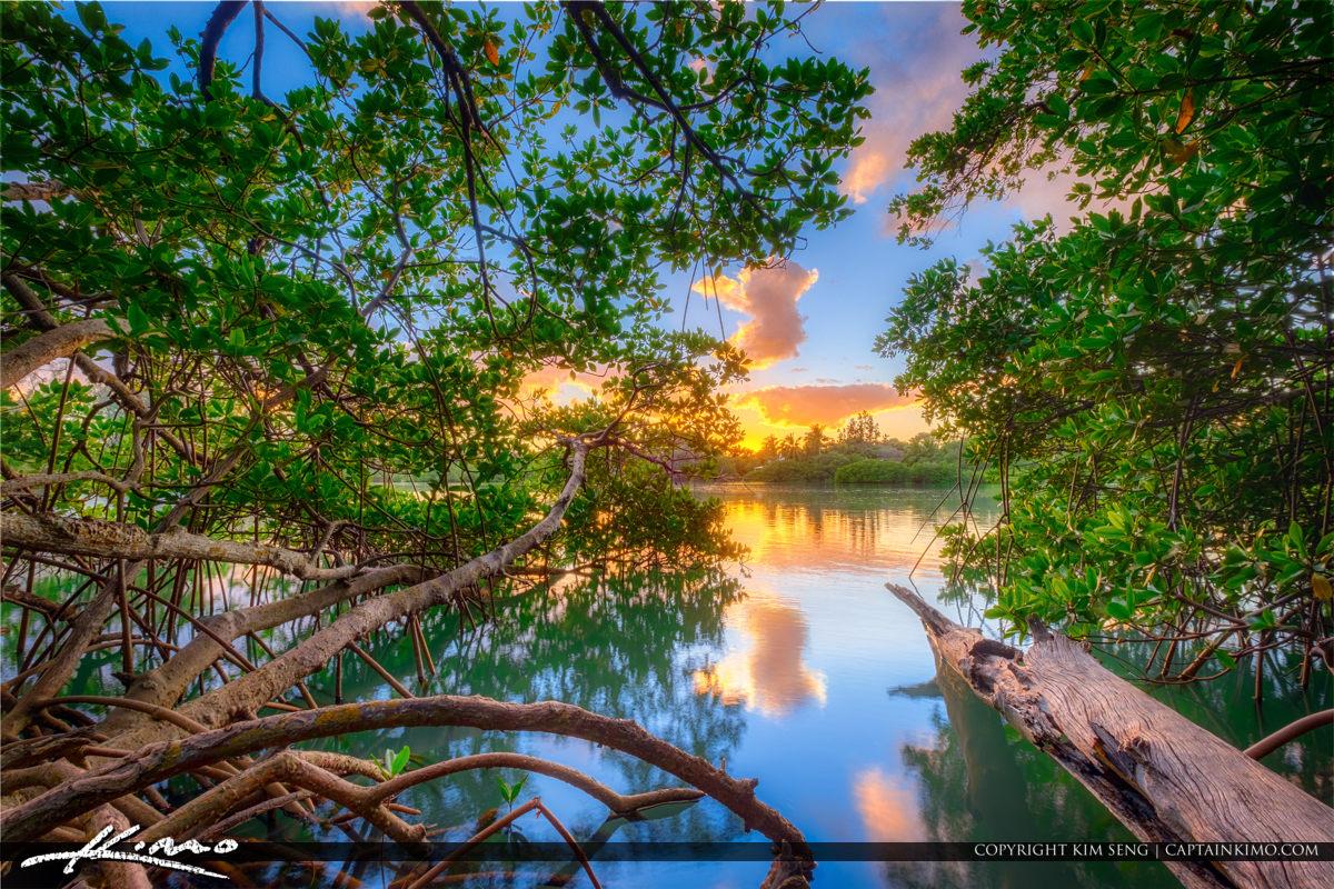 Lagoon Jupiter Beach Park Mangrove