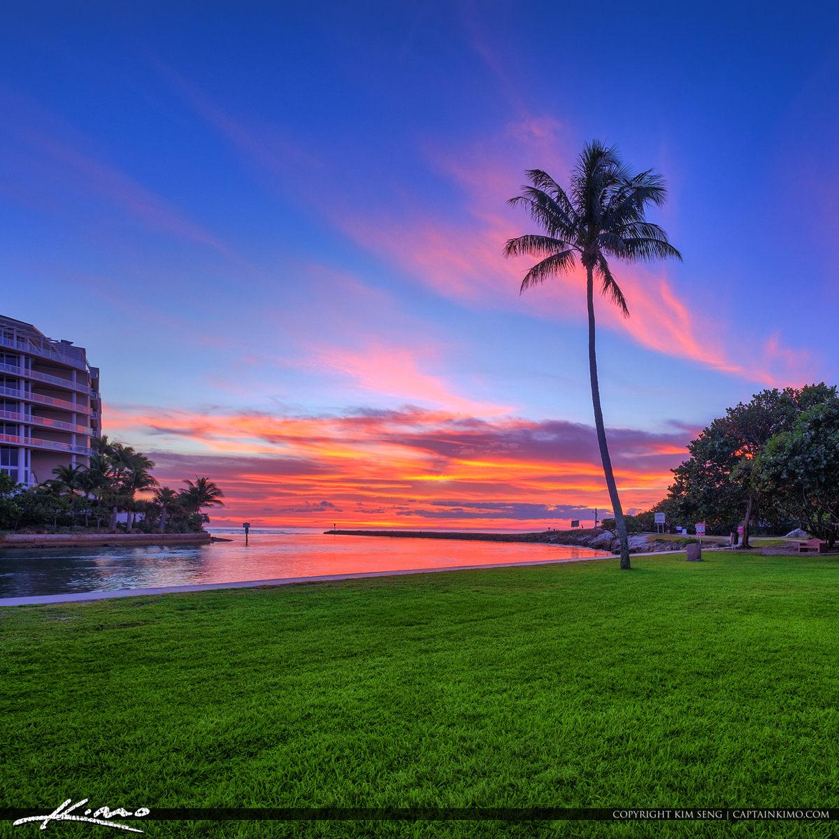 Boca Raton Inlet Sunrise Coconut Tree