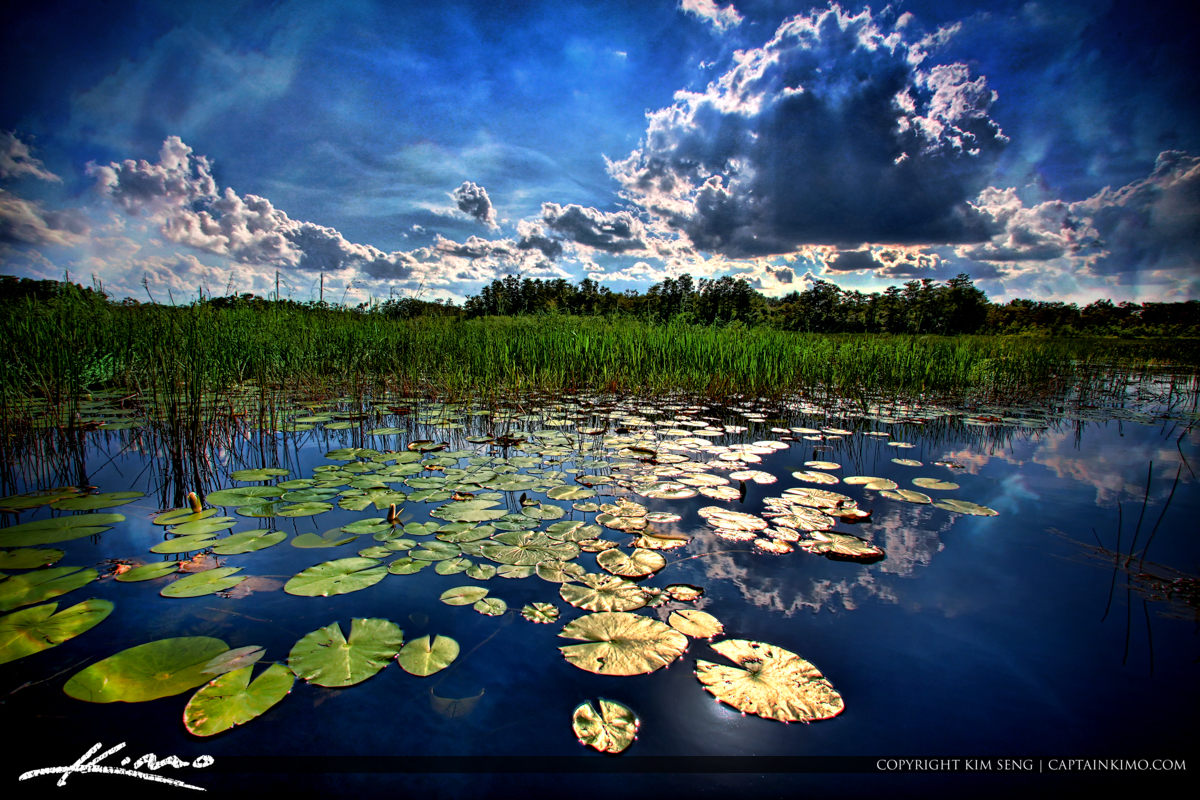 Grassy Waters Preserve