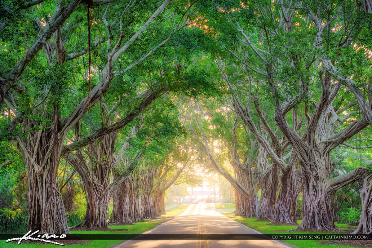 Bridge Road Tree Canopy Hobe Sound Florida