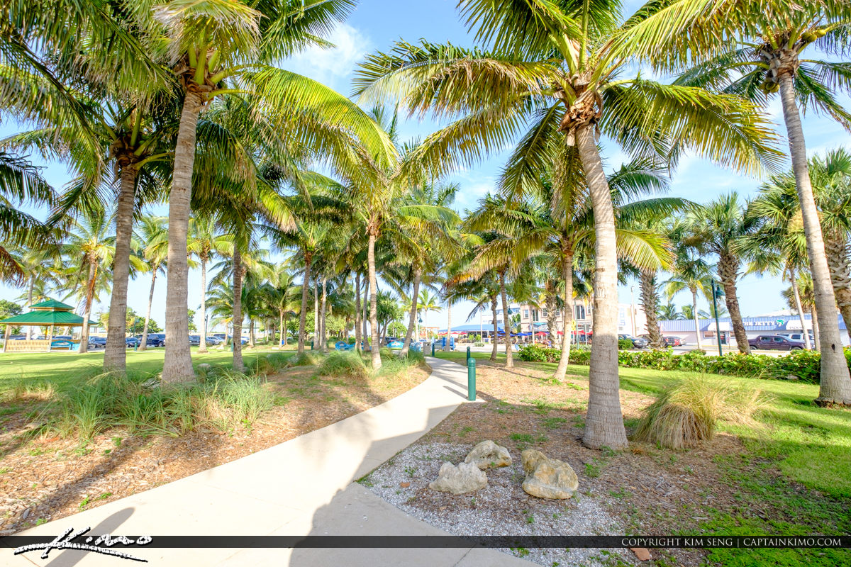 Coconut Trees Jetty Park Fort Pierce Florida