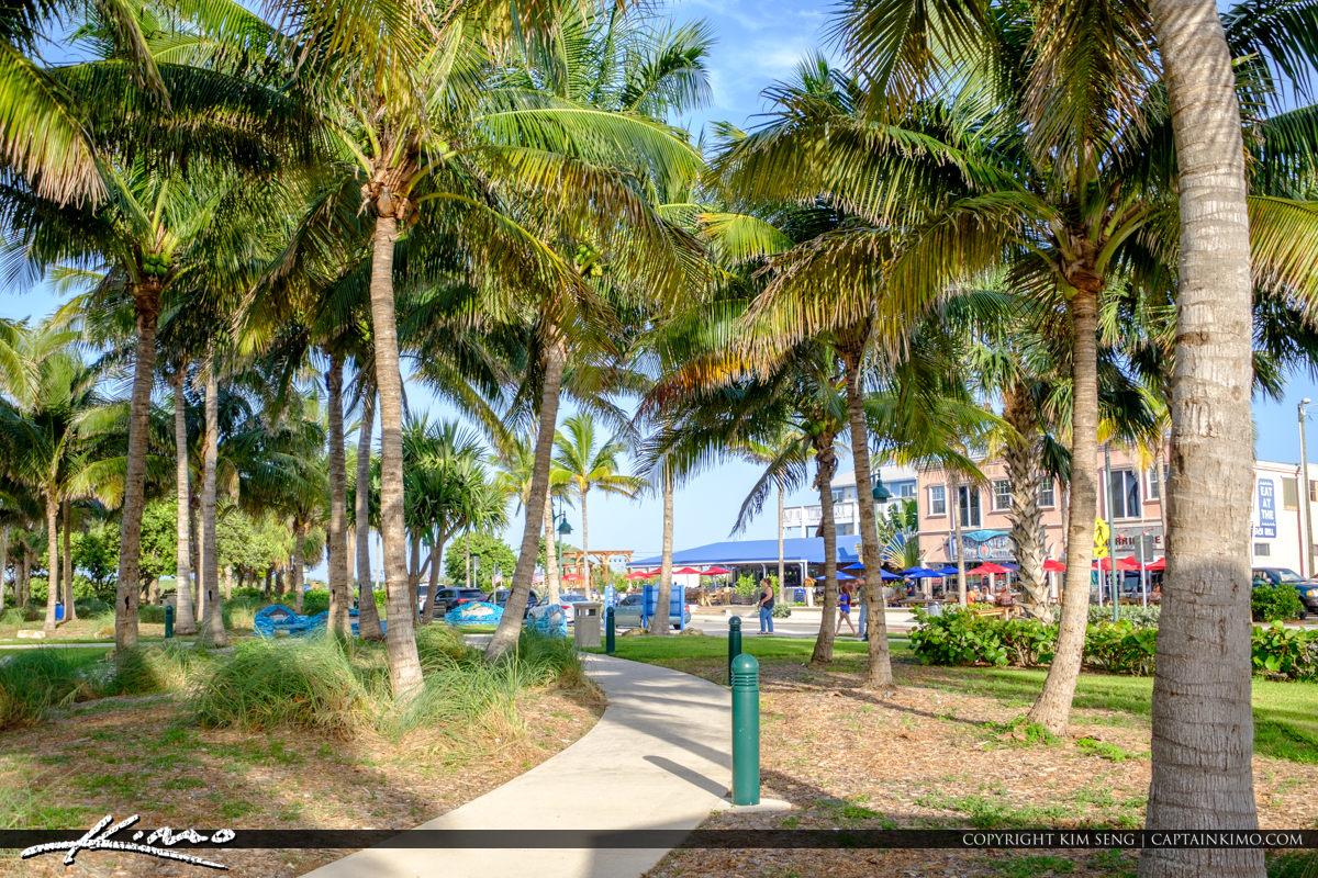 Coconut Trees Sideway Jetty Park Fort Pierce Florida